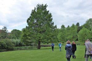 Bomenwandeling Natuurpuntbrussel
